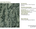 Brazil Green Maritaca